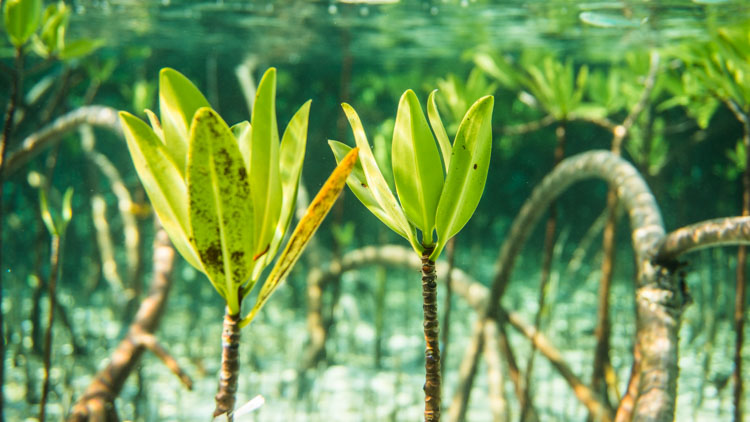 A submerged mangrove forest somewhere in the Bahamas